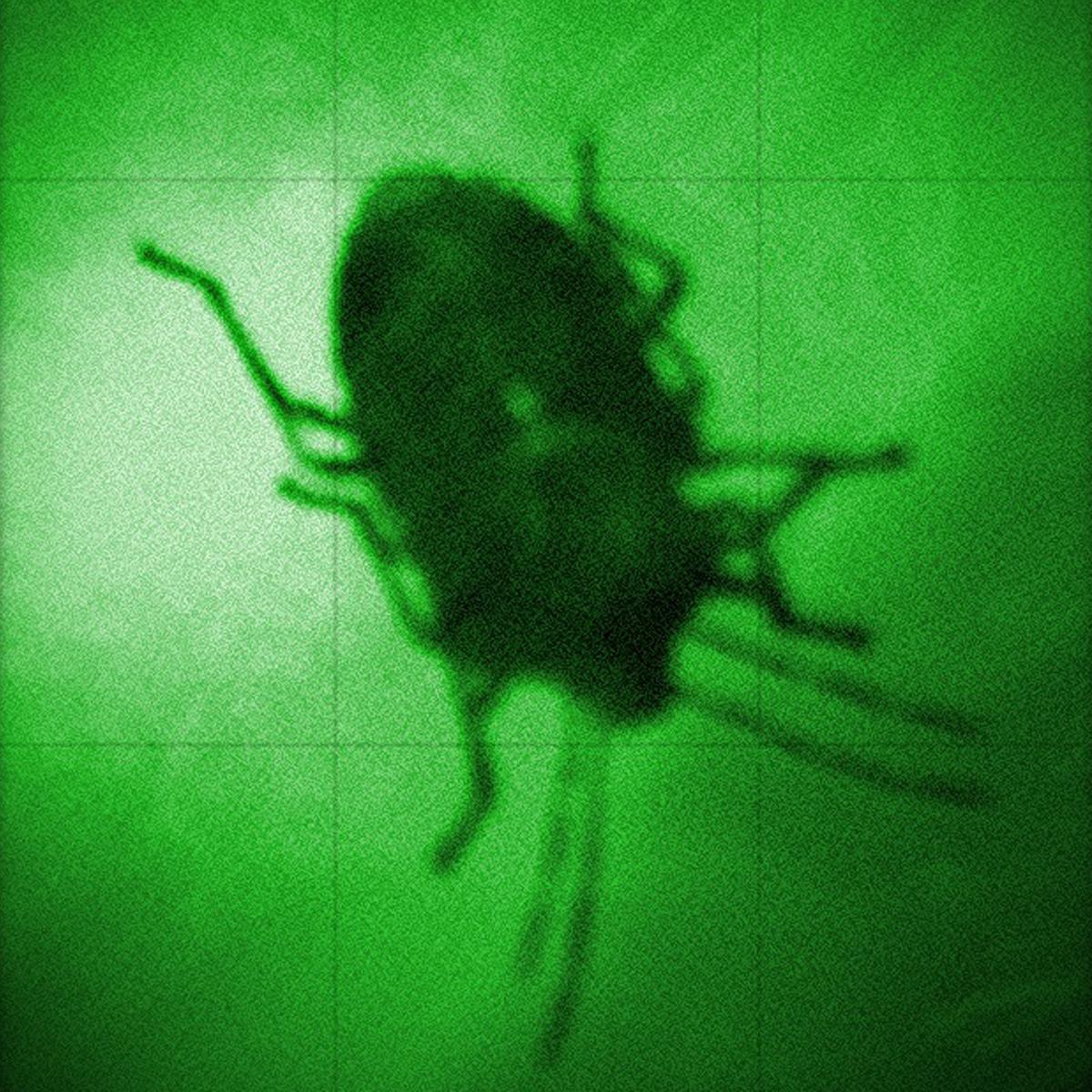 "The famous ""Blinky Bug"""